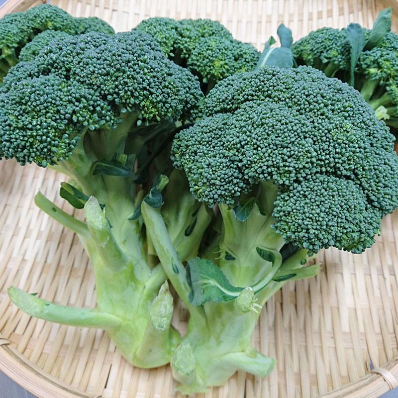 村上市は県内第2位のブロッコリーの生 産地で、春と秋の2回、収穫期を迎えます。栄養たっぷりの緑黄色野菜で、欧米では「栄養の宝石」とも呼ばれています。