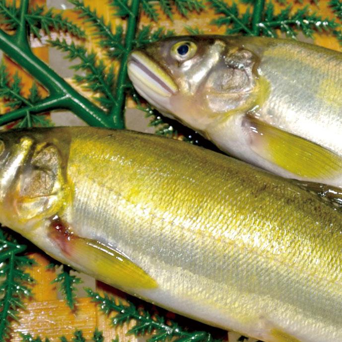 鮎は清流を代表する魚です。荒川・三面川にはたくさんの鮎が生息し、夏には県内や関東圏からの太公望で賑わいます。心地良い風が吹き抜ける川辺で食べる獲れたての鮎は絶品です。
