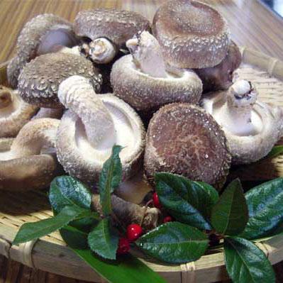 しいたけは、栄養はもちろんのこと、制ガン効果のあることでも知られております。ならの木に植菌した原木栽培で、シイタケ本来の味です。焼くと旨味が出ますので、 炭火・鉄板焼きにお奨めです。